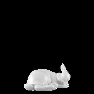Hare 2020 PAULINE -small-