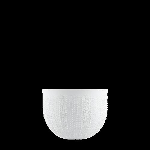 Schale (Relief Seeigel)