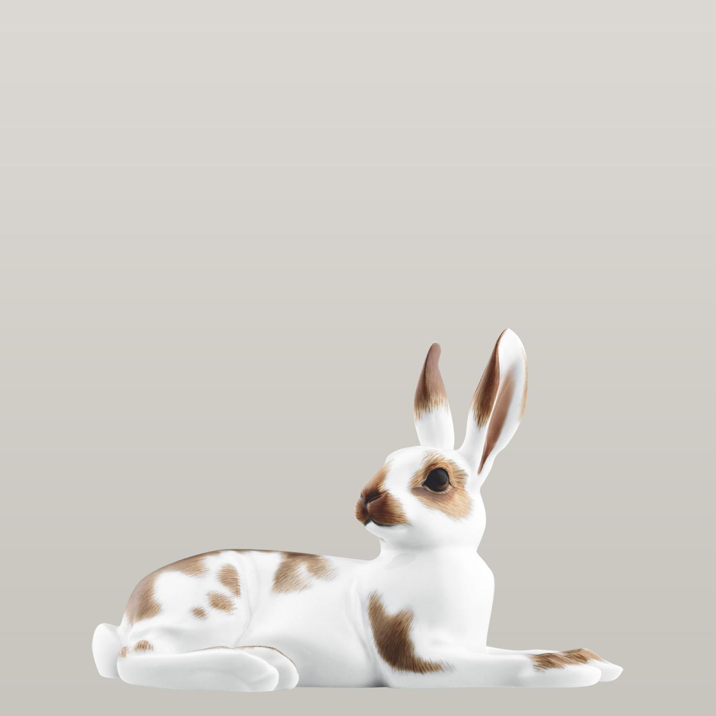 Hare 2010 JOHANN