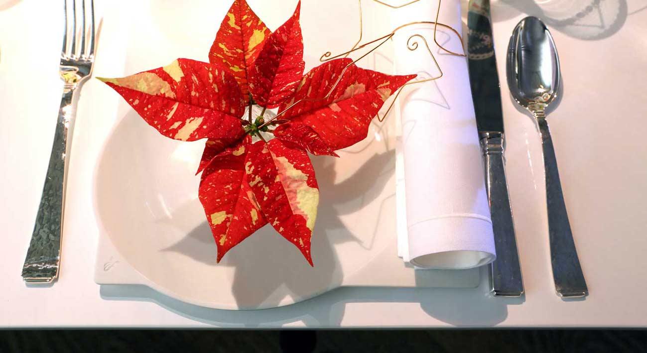 Teller eingedeckt mit rotem Weihnachtsstern als Dekoration